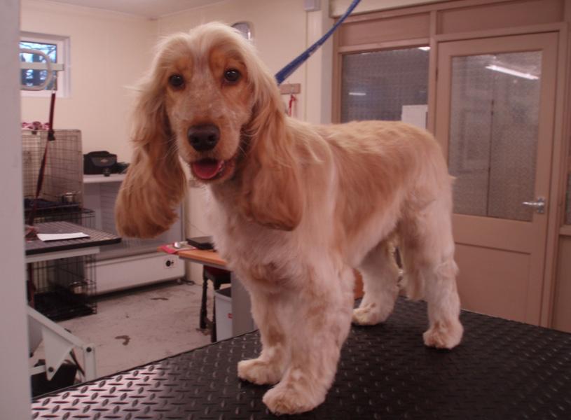 Dog Grooming Winsford