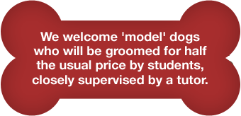 We welcome 'model' dogs who will be groomed for half the usual price by students, closely supervised by a tutor