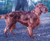 The Dog Groom Room Dog Grooming Training In Winsford