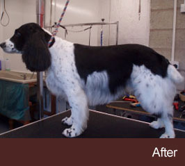 The Dog Groom Room Dog Groomer In Winsford Northwich